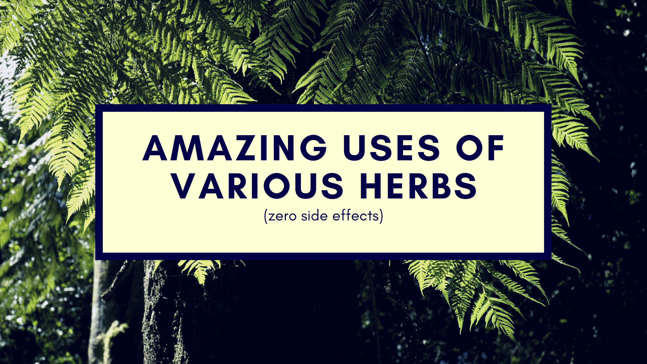 Amazing uses of various herbs zero side effects